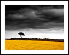 Bretagne (@lain G) Tags: nikon nikond90 france bretagne côtesdarmor ciel blé nb noiretblanc silhouette