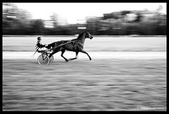 Course équestre (tany_kely) Tags: leica blackandwhite bw horse white motion black france race speed noir noiretblanc nb course blanc charente mouvement chevaux vitesse m9 équestre poitoucharentes