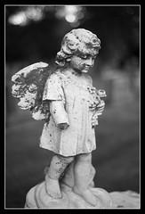 Day 41 - Broken Cherub (Calvin J.) Tags: bw ontario canada broken cemetery angel bokeh cherub orangeville n