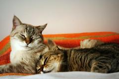 innamorarsi... (un gatto di passaggio) Tags: cat gatto gatta mici
