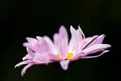 _MG_8715 (May Elin Aunli) Tags: flowers flower color macro colors norway norge outdoor sommer natur norwegen national makro blomst geographic blomster sørlandet hage farger grimstad austagder anawesomeshot
