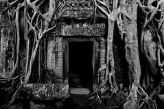 (Rachael Twells) Tags: white black tree temple cambodia tomb doorway angkor wat ta prohm raider
