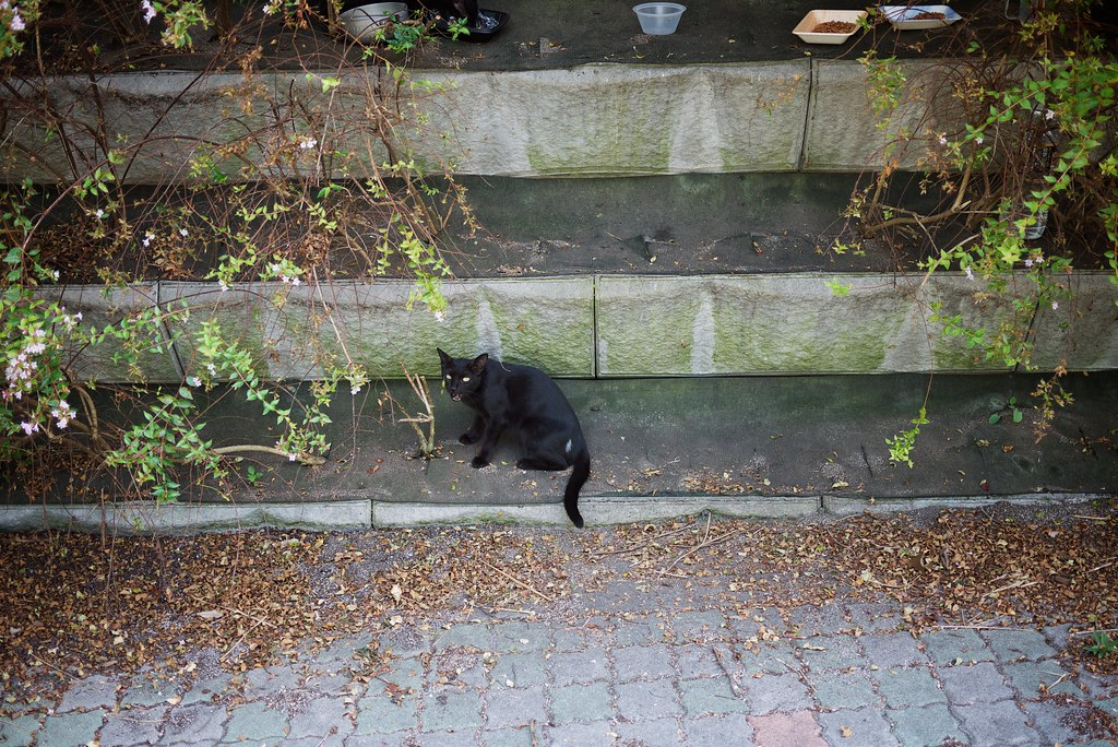 cat on the street #6
