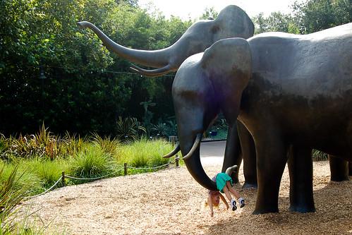 090510_elephant_swing.jpg