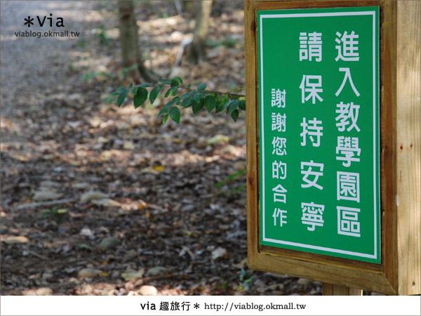 【彰化】彰化藝術高中~教室與森林結合的美麗校區3