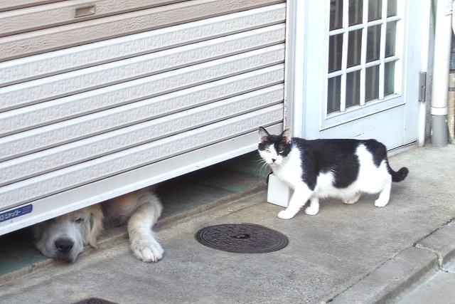 Today's Cat@2010-09-12