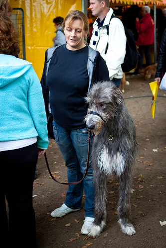 Photo irish wolfhound penis