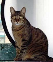 tigreton2