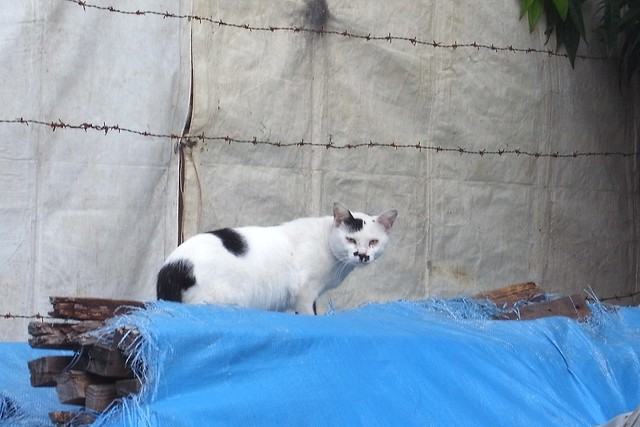 Today's Cat@2010-09-15