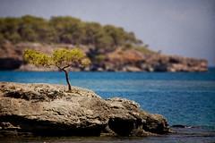Solitude (Melissa Maples) Tags: blue sea tree water rock turkey nikon asia mediterranean trkiye antalya nikkor vr afs textured  phaselis 18200mm   f3556g d40  18200mmf3556g