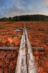Siikaneva (28/40) (Heikki S) Tags: nature landscape swamp canonef1740mmf4lusm hdr maisema luonto suo duckboard siikaneva pitkospuu siikaneva1192010 siikanevansoidensuojelualue