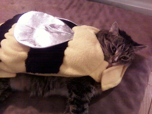 Mabel cat as bumble bee again!