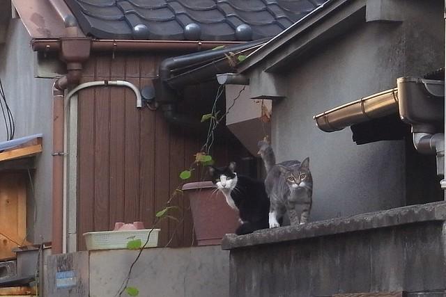Today's Cat@2010-09-17