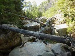 Entre la confluence Quarcitellu et le Castellucciu : vues diverses de la montée avec arbres en travers
