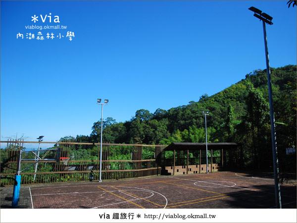 【溪頭一日遊】森林中的夢幻校園~內湖森林小學42