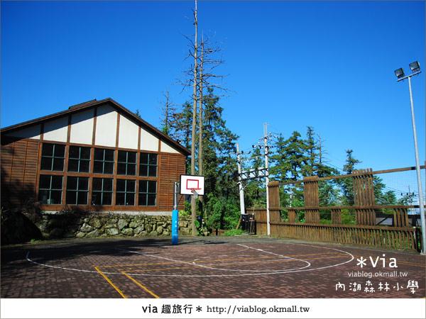 【溪頭一日遊】森林中的夢幻校園~內湖森林小學44