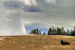 Old Faithful with a Bison (Rob Little) Tags: old landscape yellowstonenationalpark yellowstone wyoming bison faithful