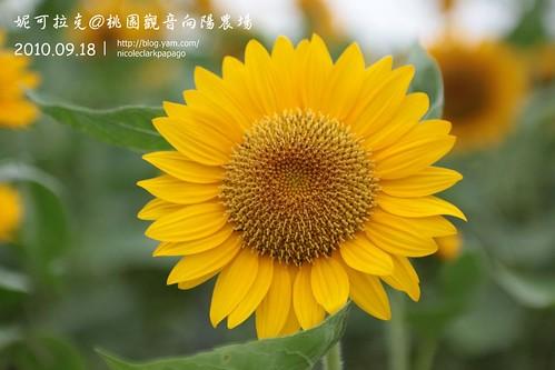桃園觀音向陽農場20100918-013