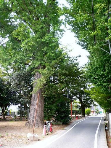 林野神社 #3