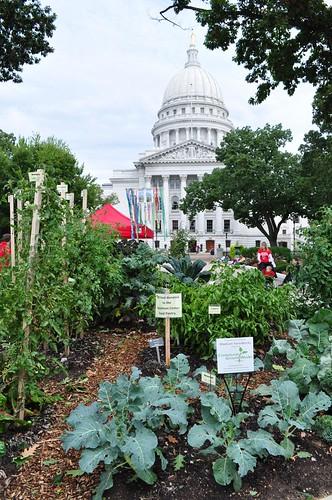 public vegetable garden in Madison
