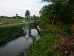 Kanak2 bermain mercun di sawah Kpg Hutan Temin (QooL / بنت شمس الدين) Tags: people boys river firecrackers qool qoolens