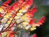 (FeeMail) Tags: park flowers germany deutschland blumen dortmund westfalenpark wonderfulworldofflowers