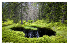 Pond, Rauriser Urwald, Austria (Christos Andronis) Tags: light black green forest landscape austria pond ancient urwald rauris  rauriser