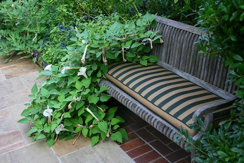 datura bench