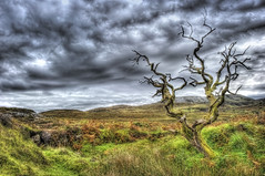 The Eternal Tree (HDR) (Nik-On!) Tags: old sky tree clouds landscape scotland nikon isleofskye hdr torrin d3s nikon2470mmf28 nikoncom
