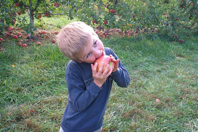 Apple Orchard 03