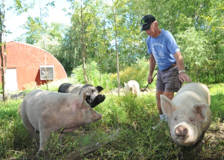 dick with pigs
