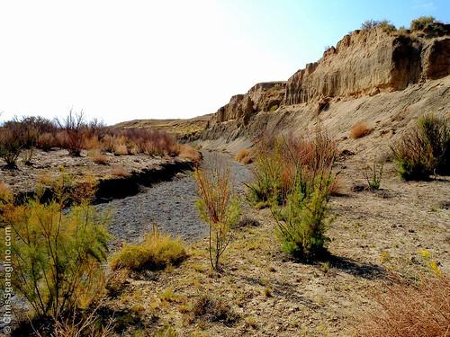 Chico Basin Creek