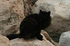 Menton (giselegg) Tags: mare paca provence francia menton citta chatnoir mentone gattonero alpimarittime occitano