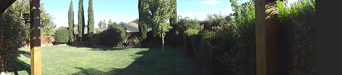 afternoon in the backyard