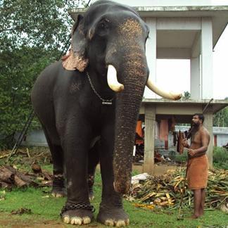 Thrikkadavoor Sivaraju 2018
