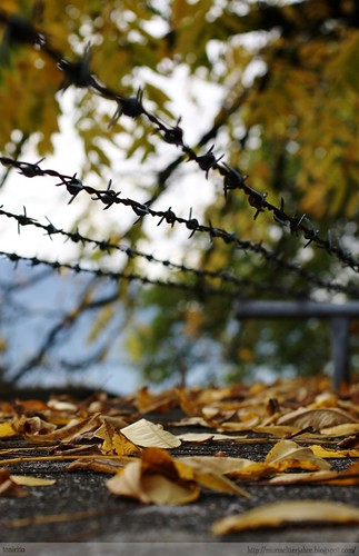 Autumn Barbed Wire