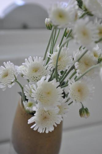 flor_flowers