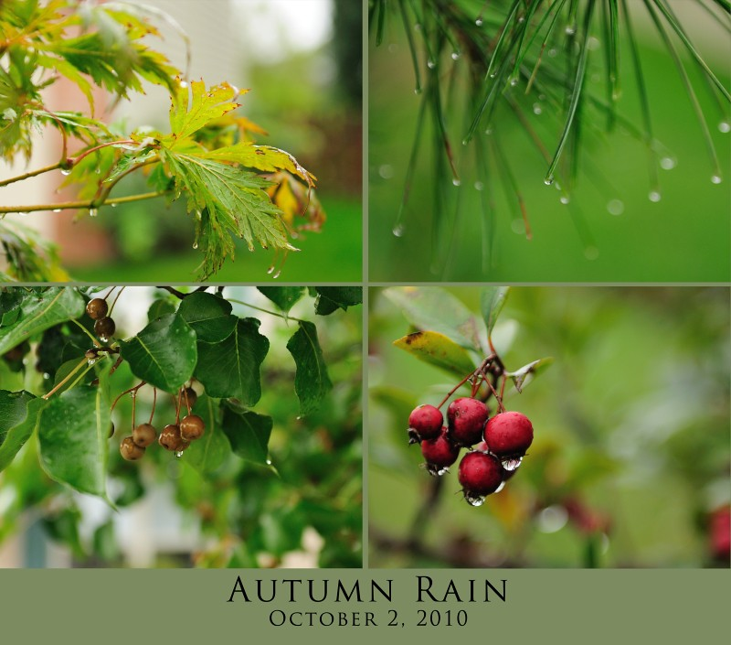 Mosiac Monday - Autumn Rain