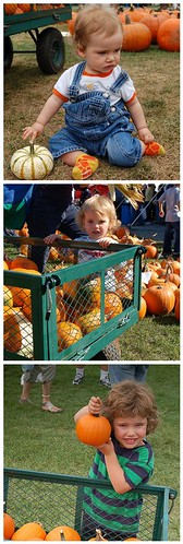 same cart pumpkin