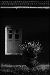 Red Wall (Prabhu B Doss) Tags: life bw india white plant black fern english still nikon hill cottage pot tiles british villas tamilnadu ooty regency udhagamandalam d80 prabhub prabhubdoss zerommphotography 0mmphotography