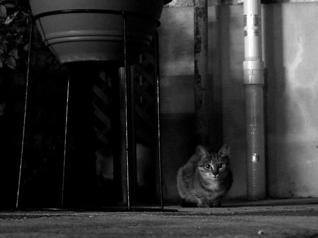 Today's Cat@2010-10-05
