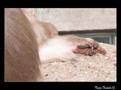 Humanizer-3 (Tania Tondolo) Tags: monkey finger dito