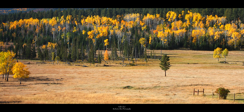 Black Hills in Autumn