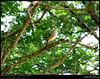 Tawny Pipit in Khadrafi, Dhalkout, Dhofar (Shanfari.net) Tags: bird nature birds lumix raw natural birding panasonic oman fz tawny zufar campestris rw2 pipit salalah passeriformes sultanate sarb dhofar عمان anthus khareef طبيعة tawnypipit anthuscampestris سلطنة motacillidae خريف صلالة dufar صلاله ظفار الخريف محافظة موسم dhufar governorate dofar fz38 fz35 dmcfz35 الصرب صرب صربية