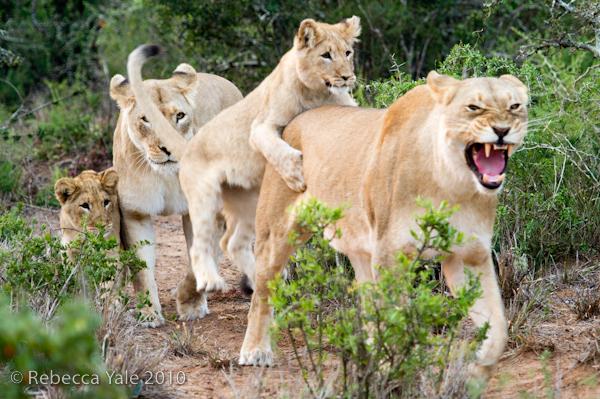 RYALE_SA_National_Park_Addo_96