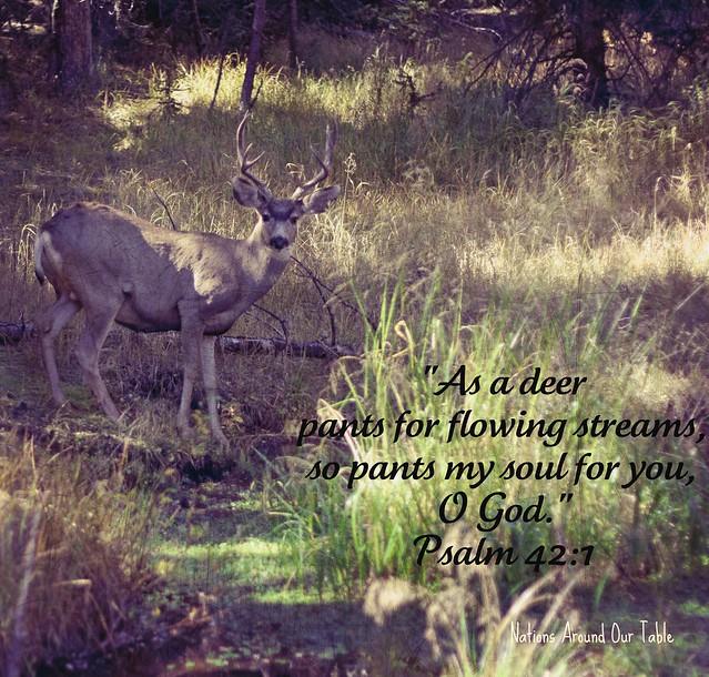 deer3-again