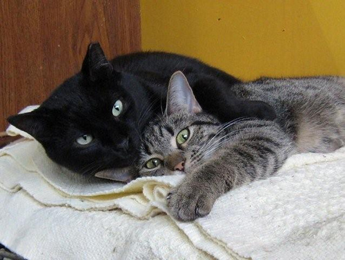 cute rescued cats snuggling