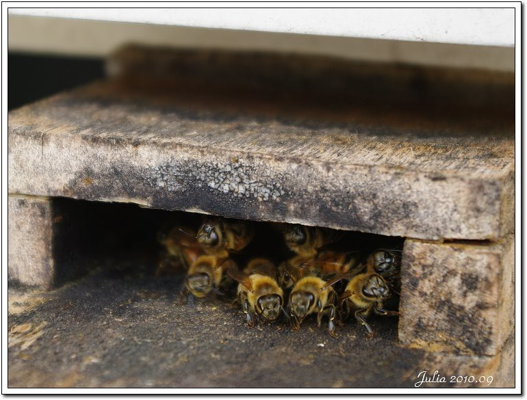 蜂采館~ (14)
