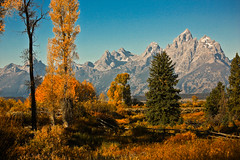 Autumn in Jackson Hole (ScenicScapes) Tags: travel autumn autumnfoliage mountain mountains fall beauty landscape scenic foliage wyoming grandtetons grandteton scenics cartwright fallfolliage photoscenics