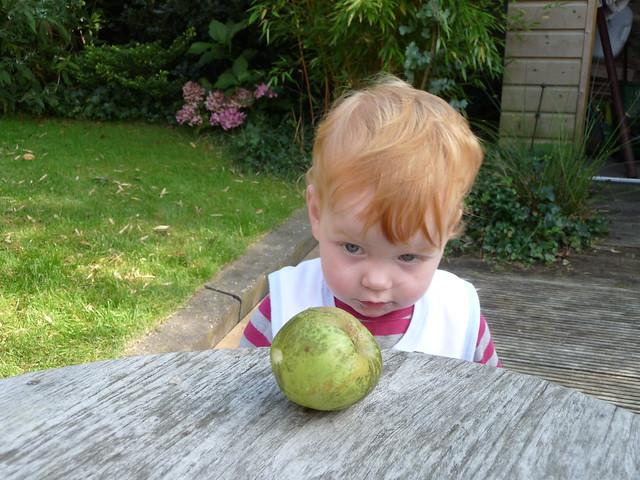 Het appél van de appel